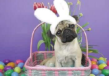 Happy Easter from Arthritis Ashley & the Mid Atlantic AF!