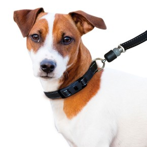 ThunderShirt Introduces Arthritis-Friendly Dog Leashes